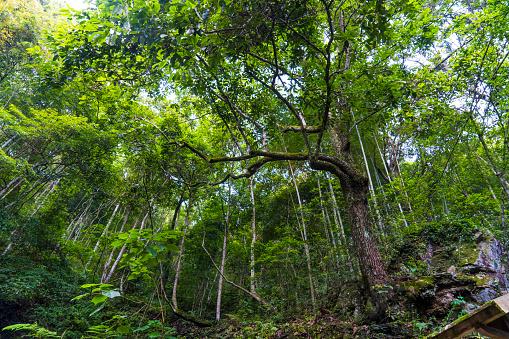 Fairy Tale「China, Fujian Province, Niumu forest」:スマホ壁紙(12)