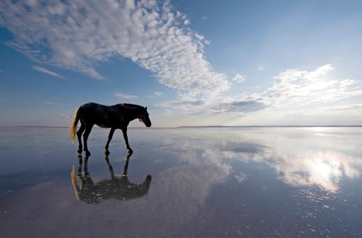 Horse「walking on the water」:スマホ壁紙(18)