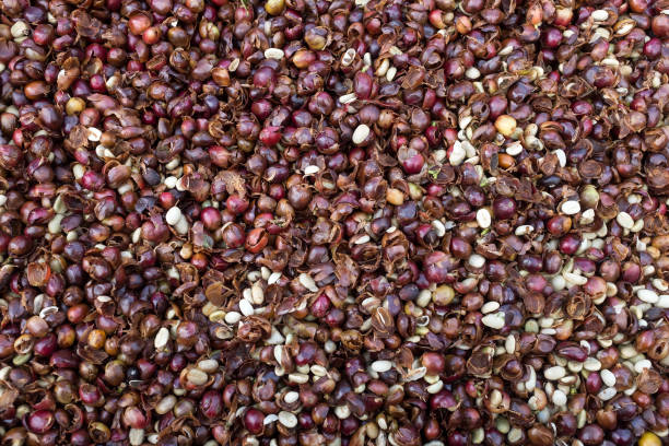 Cherry「Harvesting Coffee」:写真・画像(2)[壁紙.com]
