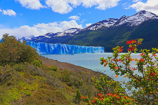 UNESCO「Perito Moreno Glacier and red wildflowers, Lake Argentino – El Calafate, Patagonia」:スマホ壁紙(7)