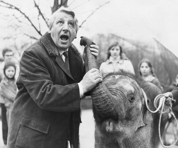 Storytelling「Elephant's Secret」:写真・画像(11)[壁紙.com]