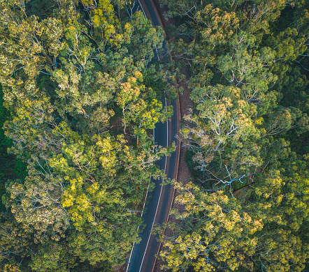 Avenue「Road in the middle of forest in Australia」:スマホ壁紙(3)
