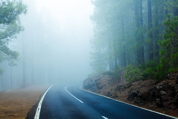 Road in the Forest Trough Fog, El Teide National Park:スマホ壁紙(壁紙.com)