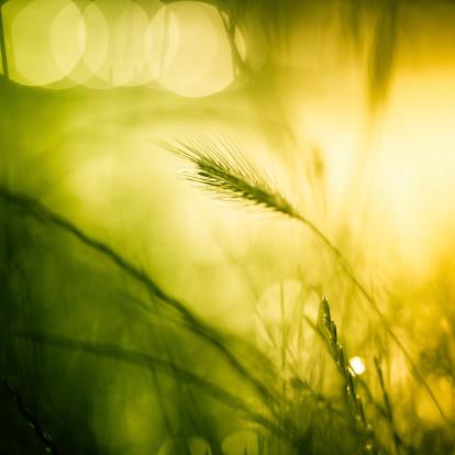 イースター「美しい草地」:スマホ壁紙(16)