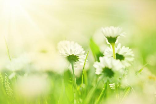 Springtime「美しい朝」:スマホ壁紙(18)