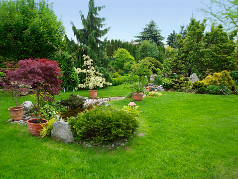 Lawn「Beautiful manicured garden with bushes, trees, stones, pond, juicy grass」:スマホ壁紙(11)