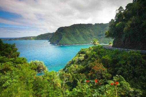 Rainforest「road to hana - maui .hawaii」:スマホ壁紙(11)