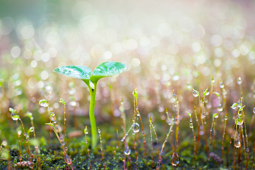 Rain「Green sprout growing.」:スマホ壁紙(7)
