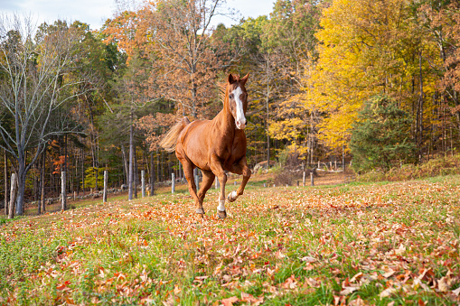 Horse「Horse running in a pasture」:スマホ壁紙(12)