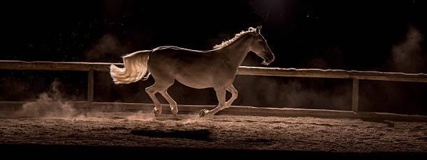 Horse running:スマホ壁紙(壁紙.com)