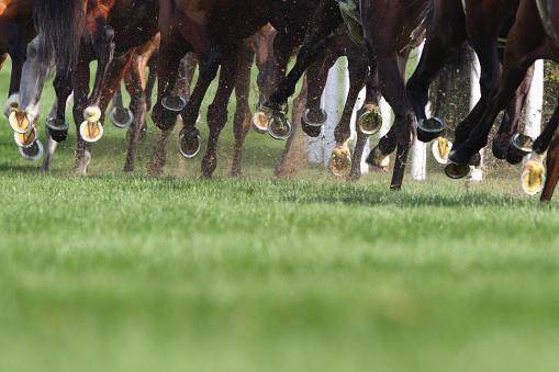 Equestrian Event「Horse Running」:スマホ壁紙(10)