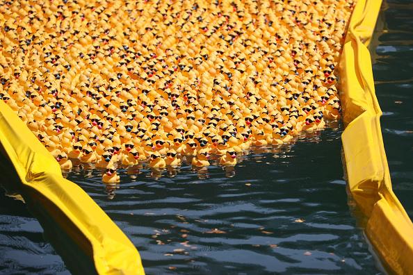 """Bestof「Rubber Ducks """"Race"""" Down Chicago River For Charity」:写真・画像(9)[壁紙.com]"""