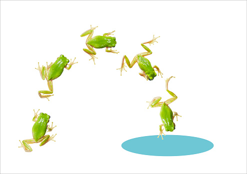 Jumping「green frogs jumping into puddle」:スマホ壁紙(3)