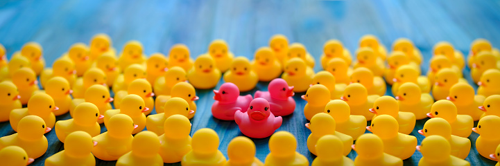 Furious「Many yellow rubber ducks gathering around and surrounding three different pink ducks, set on a turquoise coloured wooden background.」:スマホ壁紙(14)