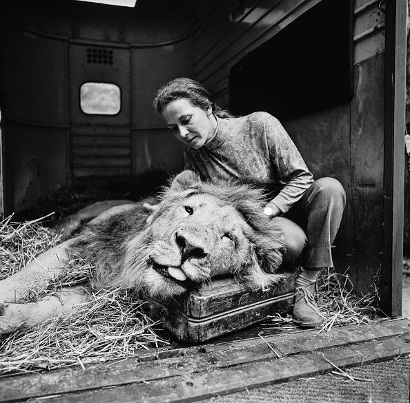 Big Cat「Mary Chipperfield And Selassie」:写真・画像(19)[壁紙.com]
