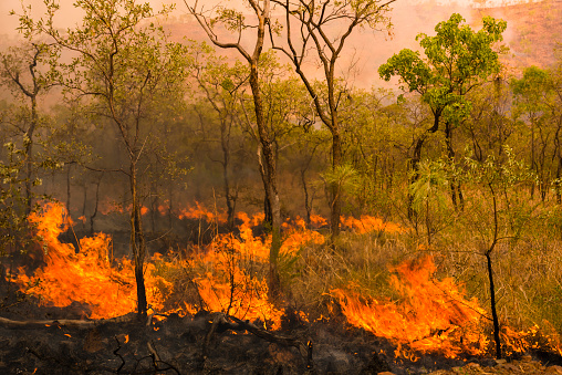 Inferno「A Bushfire Or Wildfire Burning In Outback Australia」:スマホ壁紙(6)