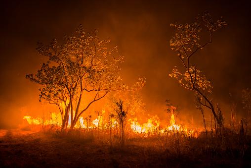 Inferno「A Bushfire Or Wildfire Burning In Outback Australia」:スマホ壁紙(9)