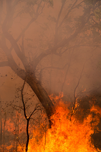 Inferno「A Bushfire Or Wildfire Burning In Outback Australia」:スマホ壁紙(1)