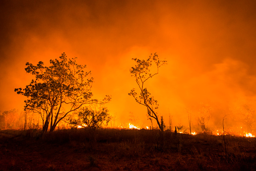 Inferno「A Bushfire Or Wildfire Burning In Outback Australia」:スマホ壁紙(15)