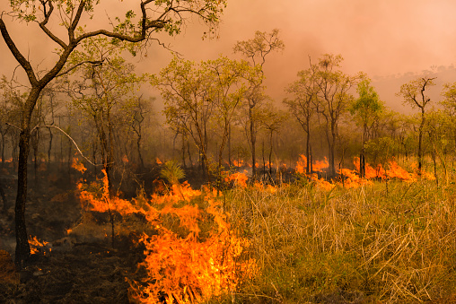 Inferno「A Bushfire Or Wildfire Burning In Outback Australia」:スマホ壁紙(10)