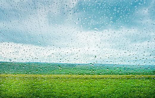 田畑「Rain drops , Shades of green」:スマホ壁紙(1)