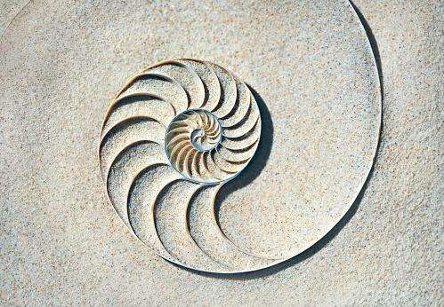 Mollusk「Nautilus shell in sea sand」:スマホ壁紙(14)