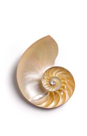 Number「Nautilus shell no 6」:スマホ壁紙(4)