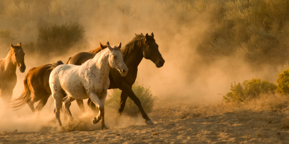 Horse「馬」:スマホ壁紙(15)