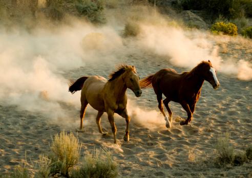 Horse「horses」:スマホ壁紙(17)