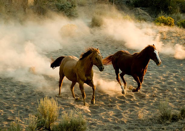 horses:スマホ壁紙(壁紙.com)