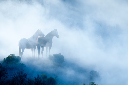 Animals In The Wild「Horses」:スマホ壁紙(13)