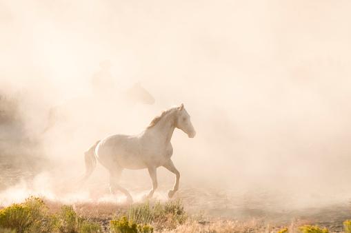 Sagebrush「Horses」:スマホ壁紙(11)