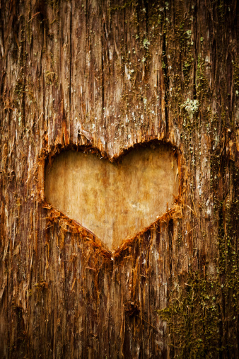 Plant Bark「Heart shape of love on a tree in the forest」:スマホ壁紙(14)