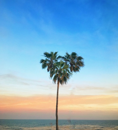 Love - Emotion「Heart shaped palm tree, Laguna Beach, Orange County, California, America, USA」:スマホ壁紙(5)