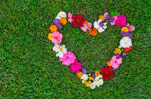 バレンタインデー「Heart shape formed with small, mulitcolored flowers laying on grass」:スマホ壁紙(18)