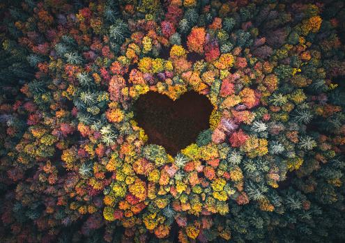 秋「秋の森のハートシェイプ」:スマホ壁紙(4)