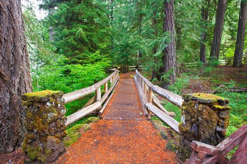 ウィラメット国有林「Trail To Sahalie Falls And Mckenzie River In Willamette National Forest; Oregon United States Of America」:スマホ壁紙(19)