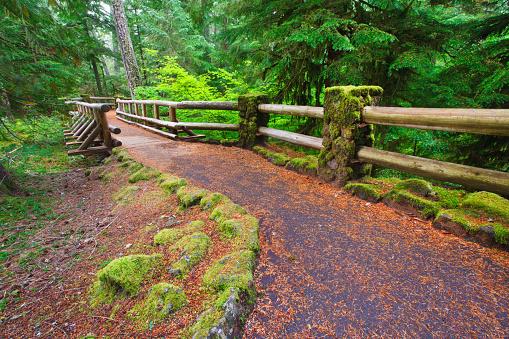 ウィラメット国有林「Trail To Sahalie Falls And Mckenzie River In Willamette National Forest; Oregon United States Of America」:スマホ壁紙(17)