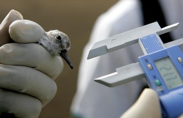 Beak「Migratory Birds Tested For Avian Flu In California」:写真・画像(13)[壁紙.com]