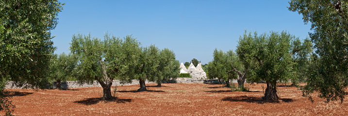 Grove「Olive grove with typical trullo near the town」:スマホ壁紙(1)