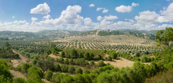 Grove「Olive grove, Baixo Alentejo, Portugal, high angle view」:スマホ壁紙(9)