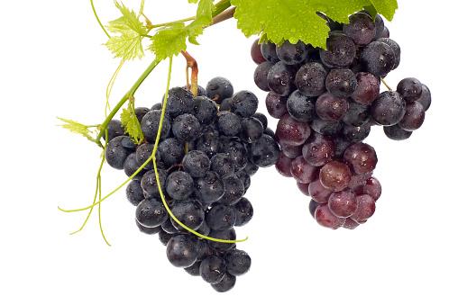 Grape「Grape」:スマホ壁紙(5)