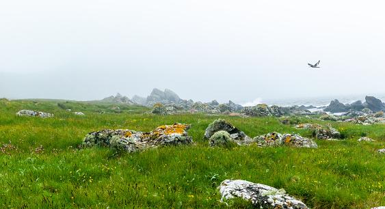 Island of Arran「Oystercatcher flying over the coastline, Isle of Arran, Scotland, United Kingdom」:スマホ壁紙(18)