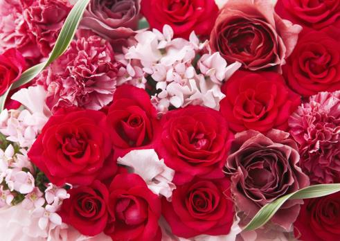カーネーション「Flower arrangement」:スマホ壁紙(5)
