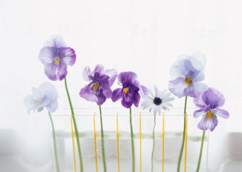 Surrounding「Flower Arrangement」:スマホ壁紙(7)