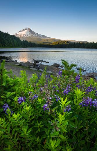 花「Trillium 湖の夕日」:スマホ壁紙(19)