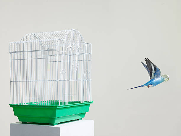 Budgie escaping from a cage:スマホ壁紙(壁紙.com)