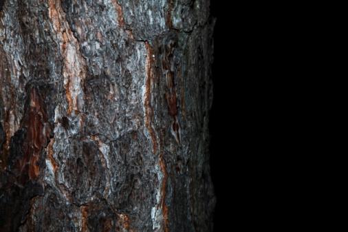 Plant Bark「pine tree on black background」:スマホ壁紙(3)