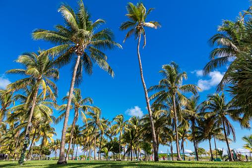 Miami Beach「Miami, South Beach, Lummus Park」:スマホ壁紙(1)
