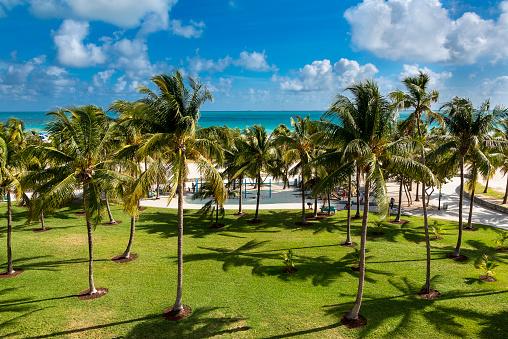 Miami Beach「Miami, South Beach, Lummus Park」:スマホ壁紙(2)